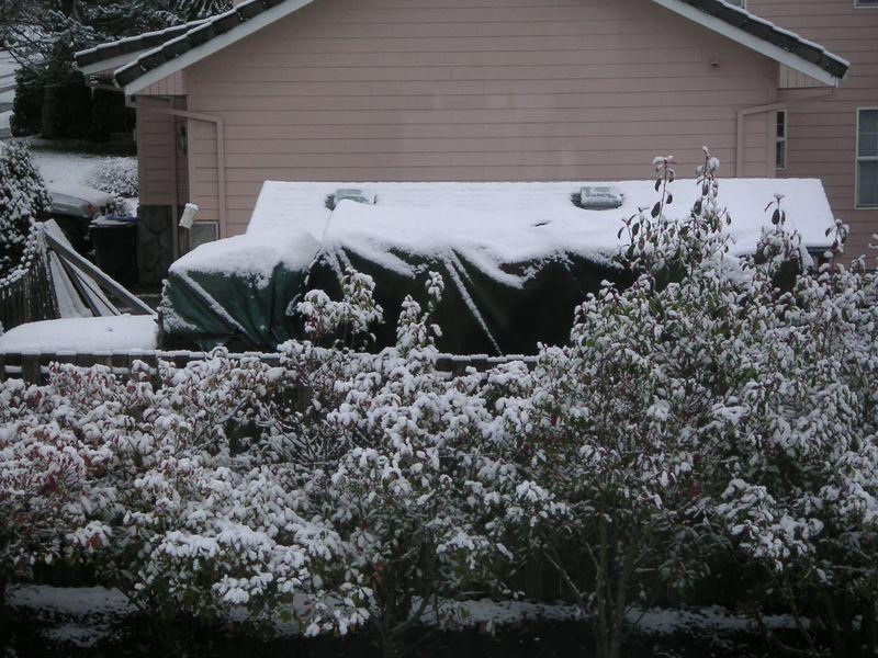 Snow 022411 002